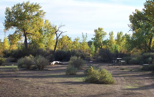 Ltva Long Term Visitor Area And Other Blm Campgrounds