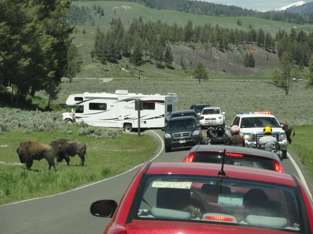 Yellowstone RV Camping